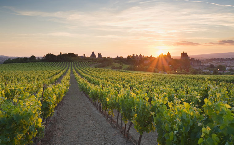 The taste of Southern France: a guide to the best Languedoc wine tours