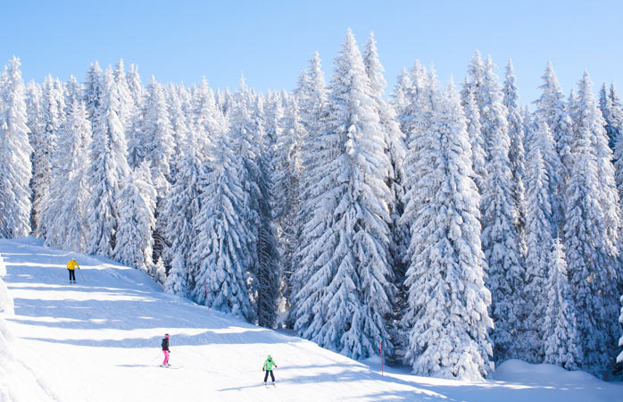 A group goes skiing in Kopaonik, surrounded by picturesque, snow covered trees