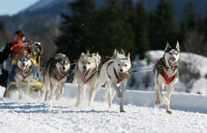 Woof! Go dog-sledding in Alaska this winter