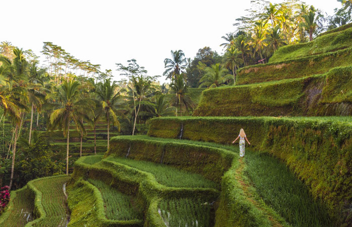 Sleep, eat, do some yoga, walk through the rice paddies and repeat!