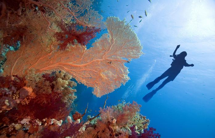Spend some time underwater in Sharm El Sheikh