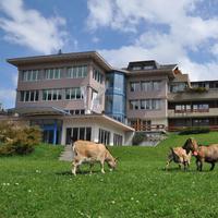 Hotels In Adelboden Find Cheap Adelboden Hotels With Momondo - Hotel alpina adelboden